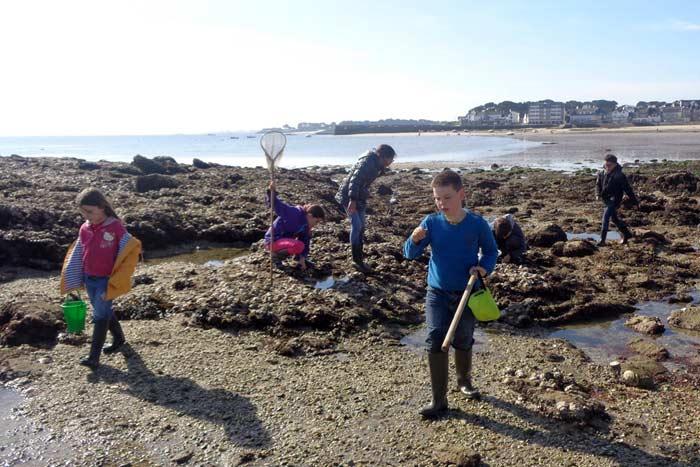 Recherche de petites bêtes dans les rochers