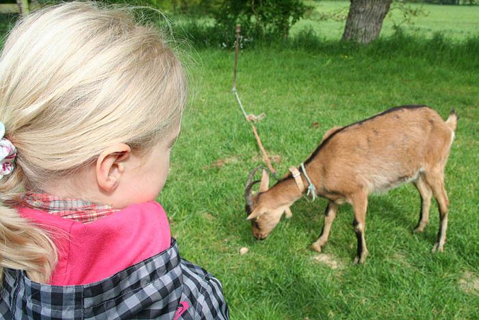 Un enfant observant un animal