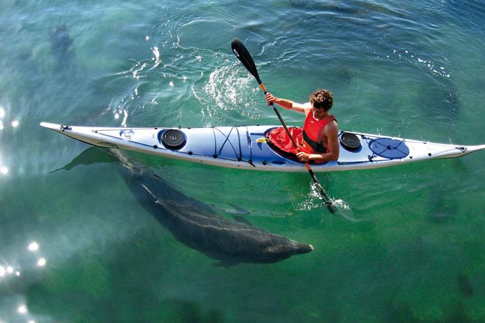 Rencontre avec un dauphin !