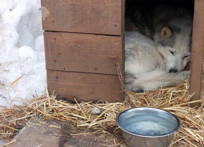 Le chien présent sur le centre pendant le séjour